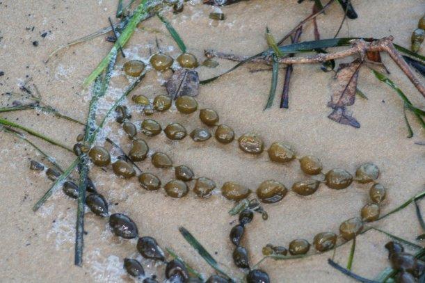 dangar sand2
