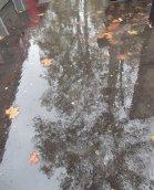 Toulouse autumn
