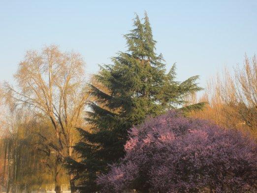 Spring replacing Winter