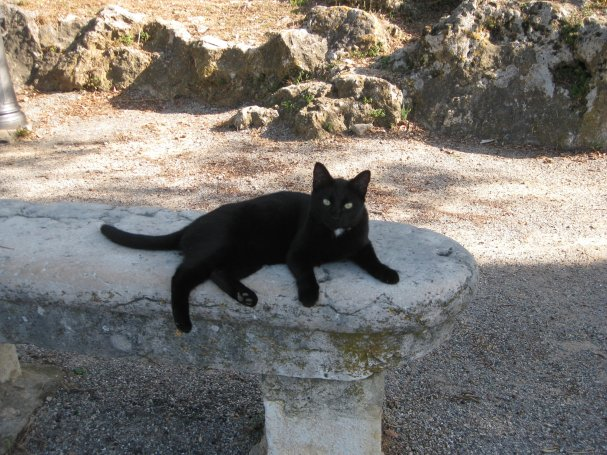 Black cat, Fayence, France.